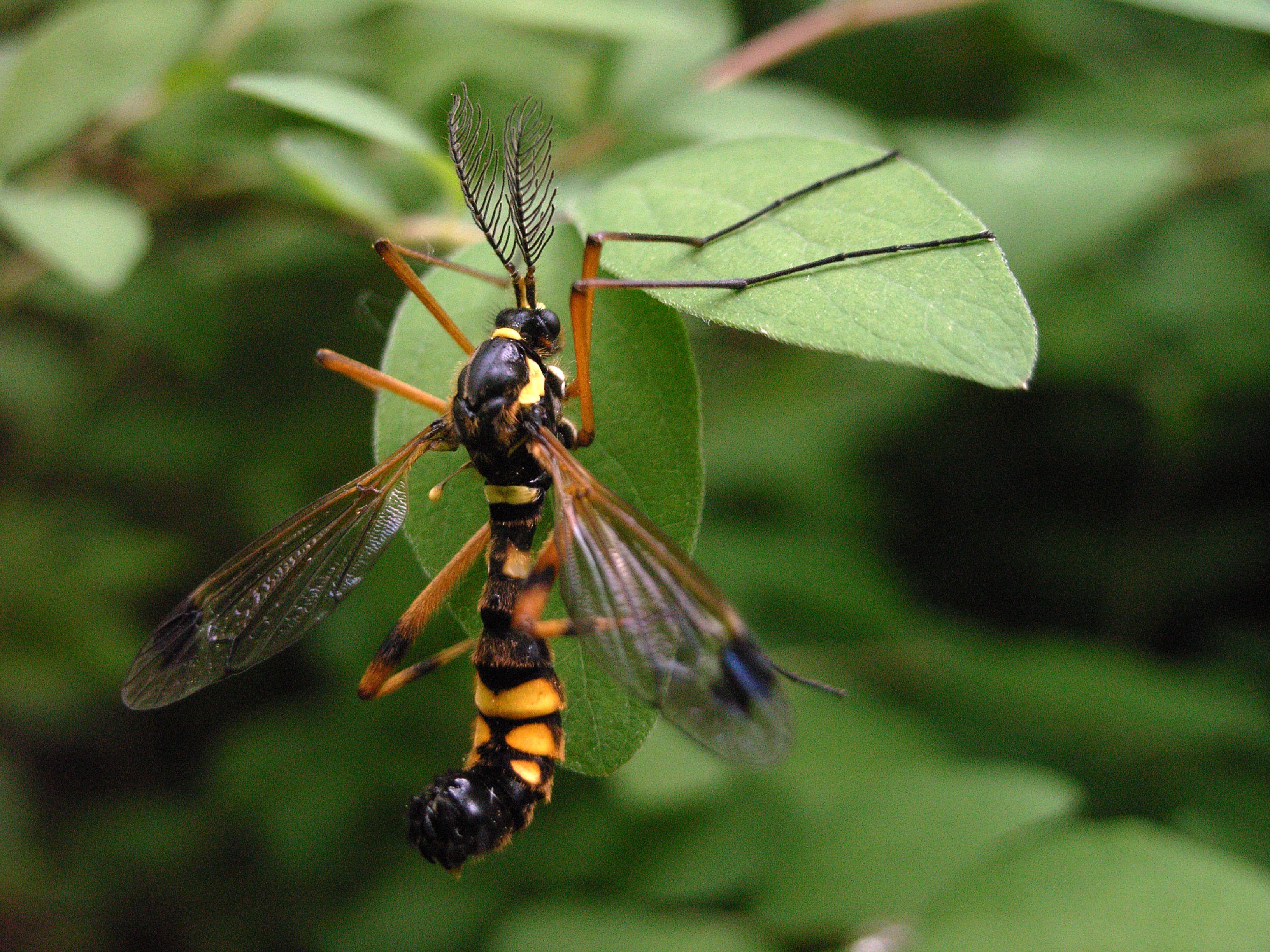 insekt mit r