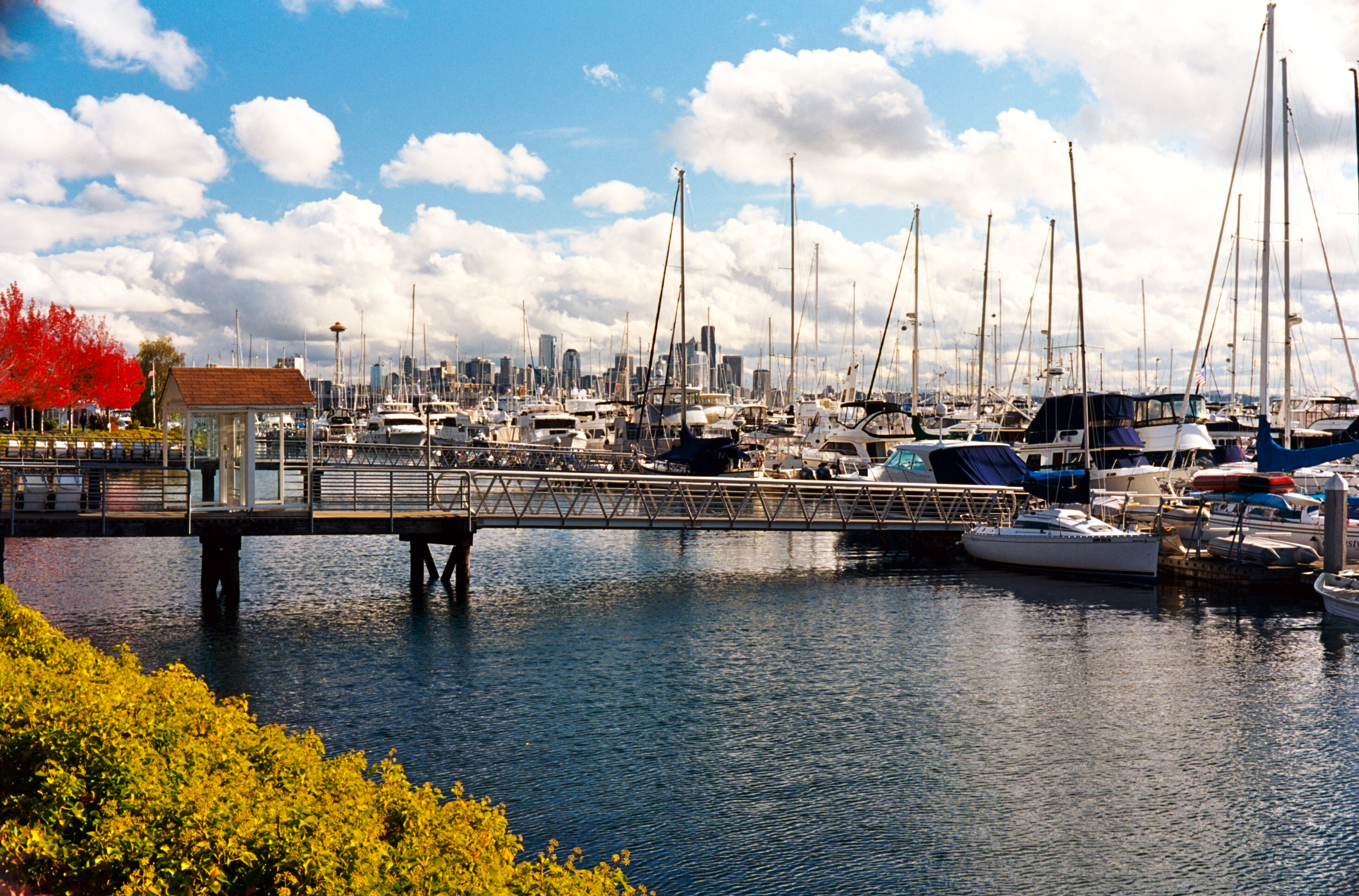 Elliott Bay Marina - Wikipedia