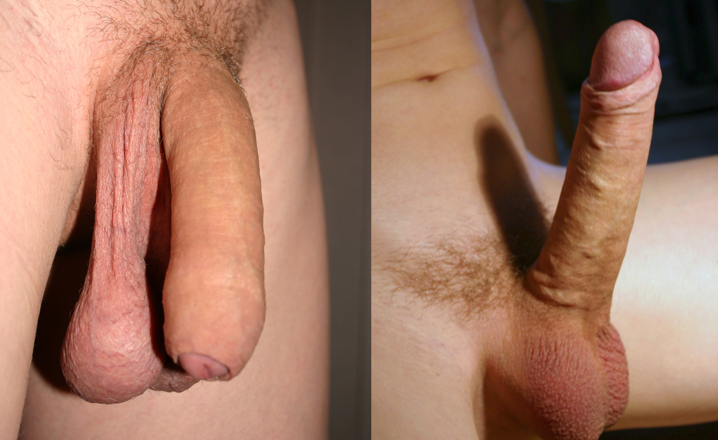 Hard uncut cock with black pubes