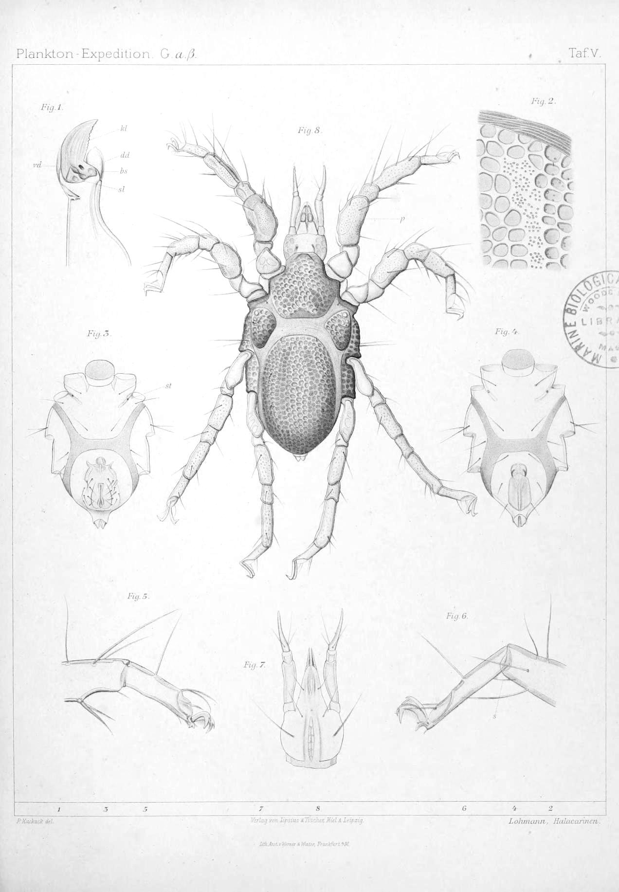 File:Ergebnisse der Plankton-Expedition der Humboldt-Stiftung (2Gaβ ...