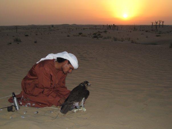 File:Falcon Dubai.jpg
