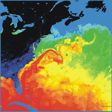 Gulf Stream thermal image