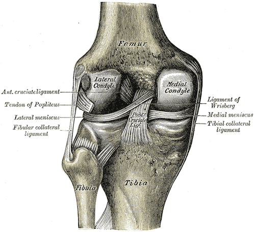 Medial condyle of femur - Wikipedia