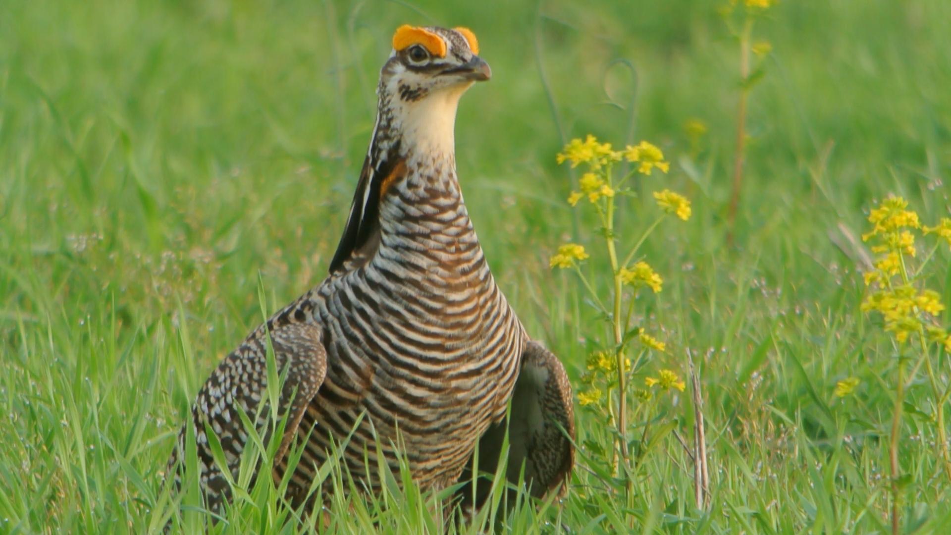 Prairie A Natural History