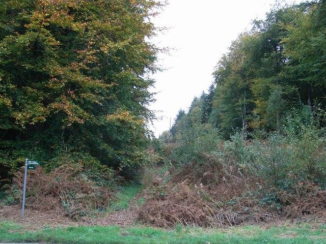 Harryhill Plantation - geograph.org.uk - 268012
