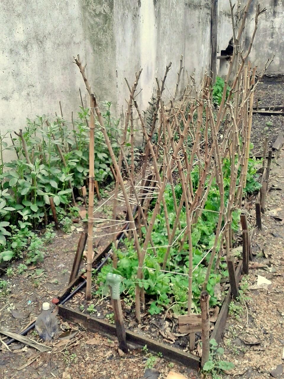 Horticultura org nica wikipedia la enciclopedia libre for Plantas para huerta organica