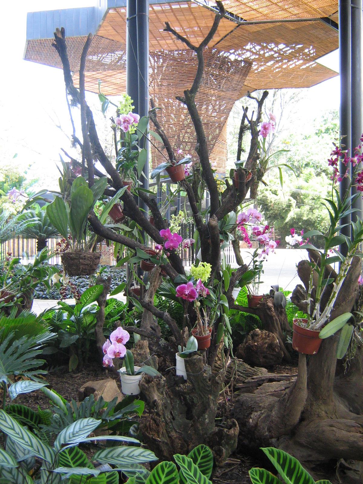 File jardin botanico de medellin orquidea 11 jpg for Plantas de un jardin botanico