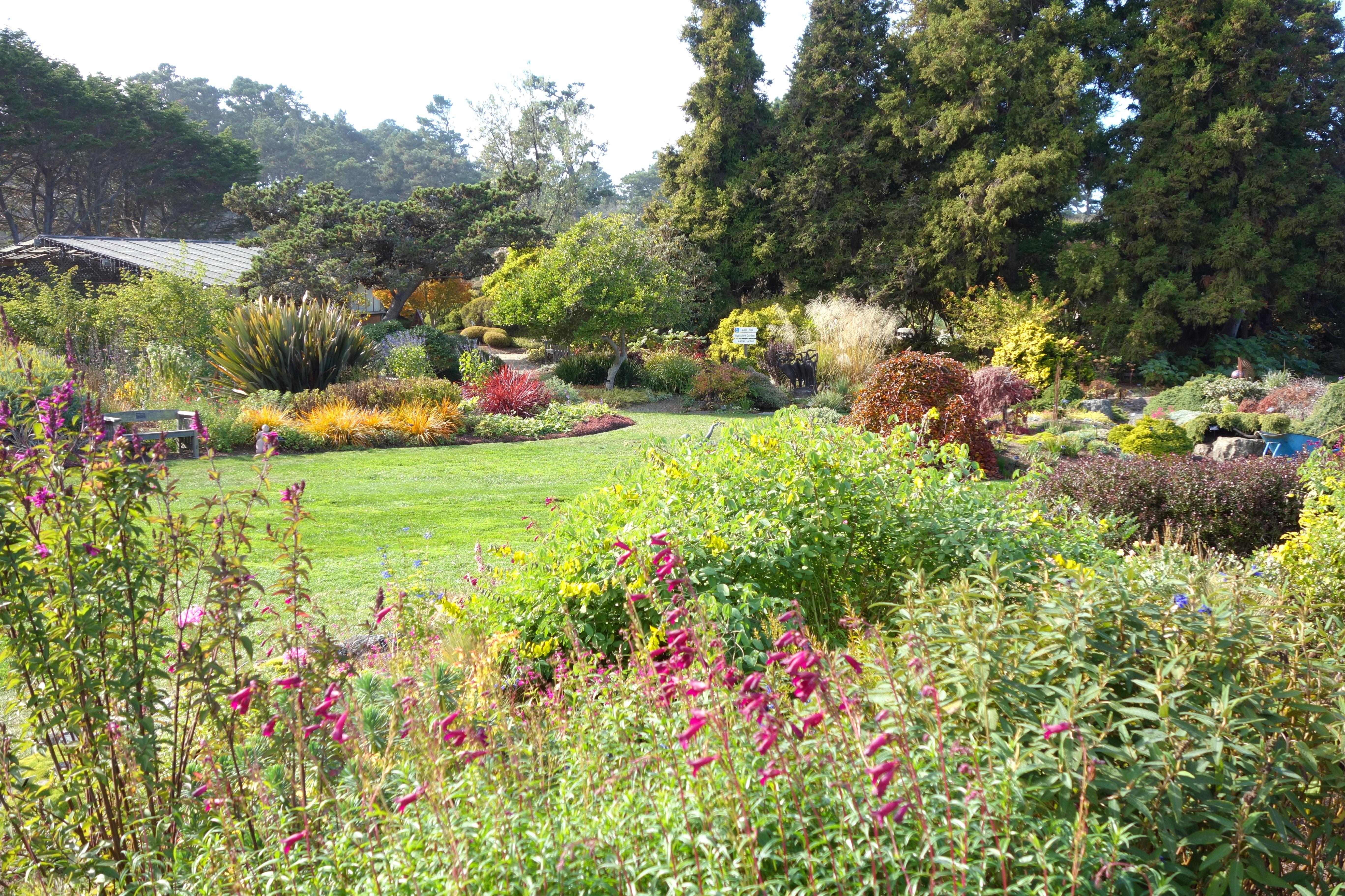 File Lawn Mendocino Coast Botanical Gardens Dsc02003 Jpg Wikimedia Commons