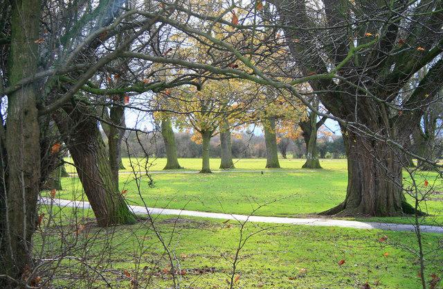 : Low Sun in West Park