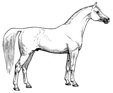 Morphotype-sh