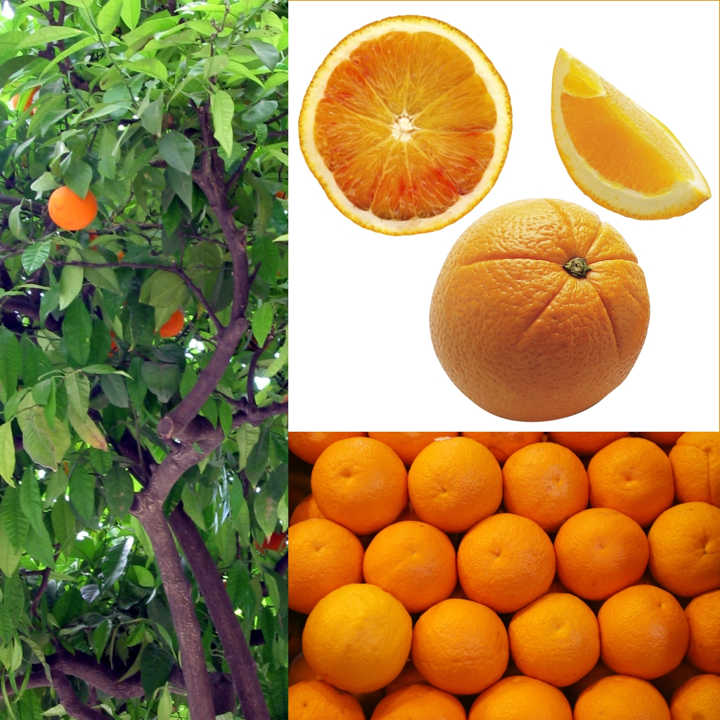Valor nutricional de la naranja agria