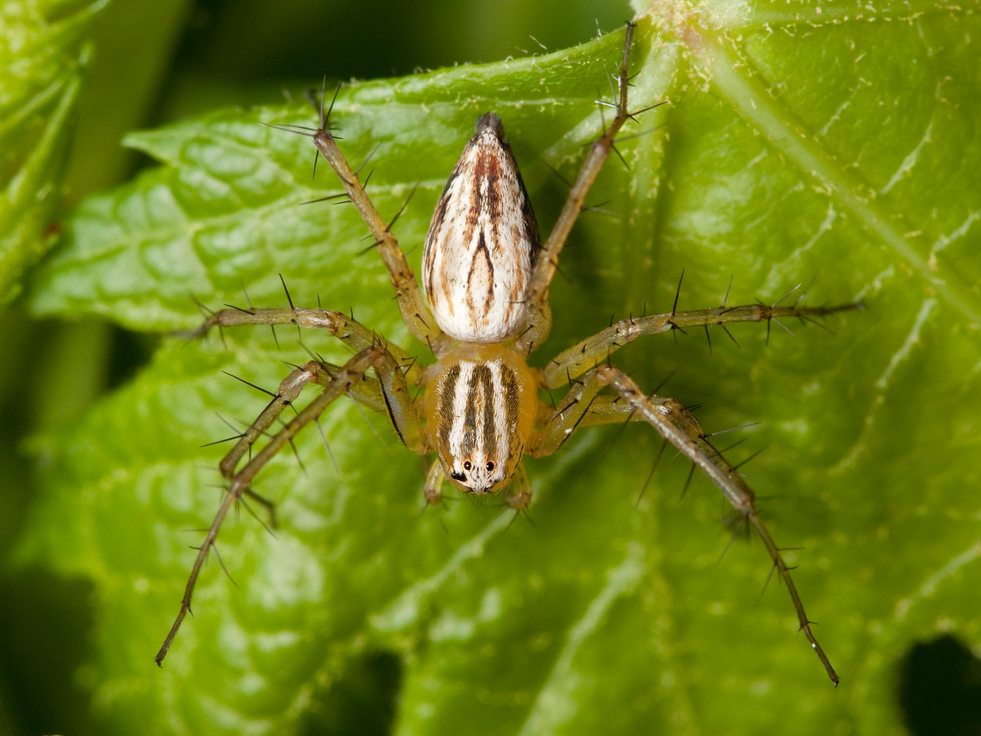 Si tenés arañas en tu jardin, entrá..