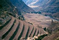 Agricultura Incaica Wikipedia La Enciclopedia Libre