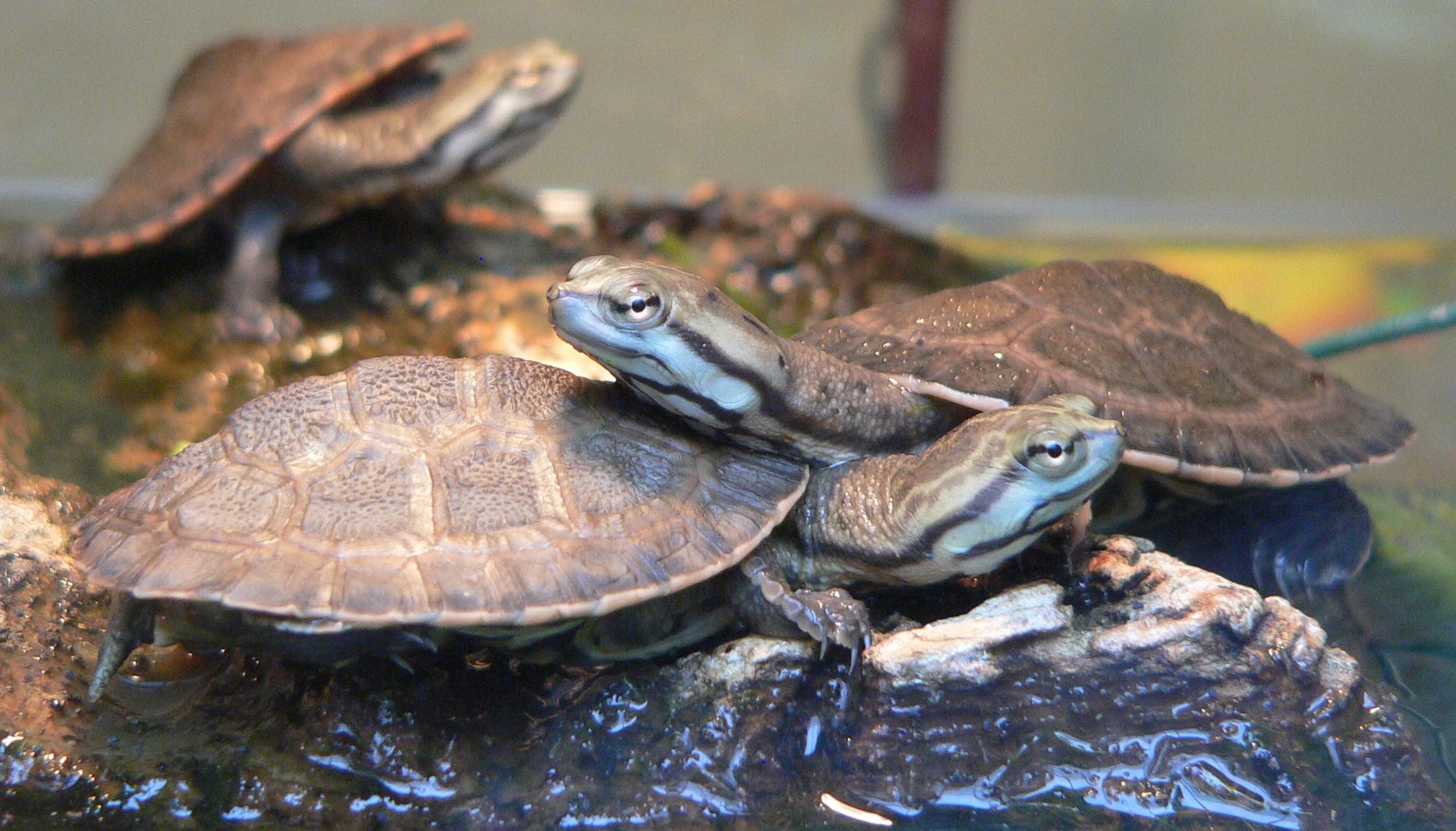 Turtle Safe Food List