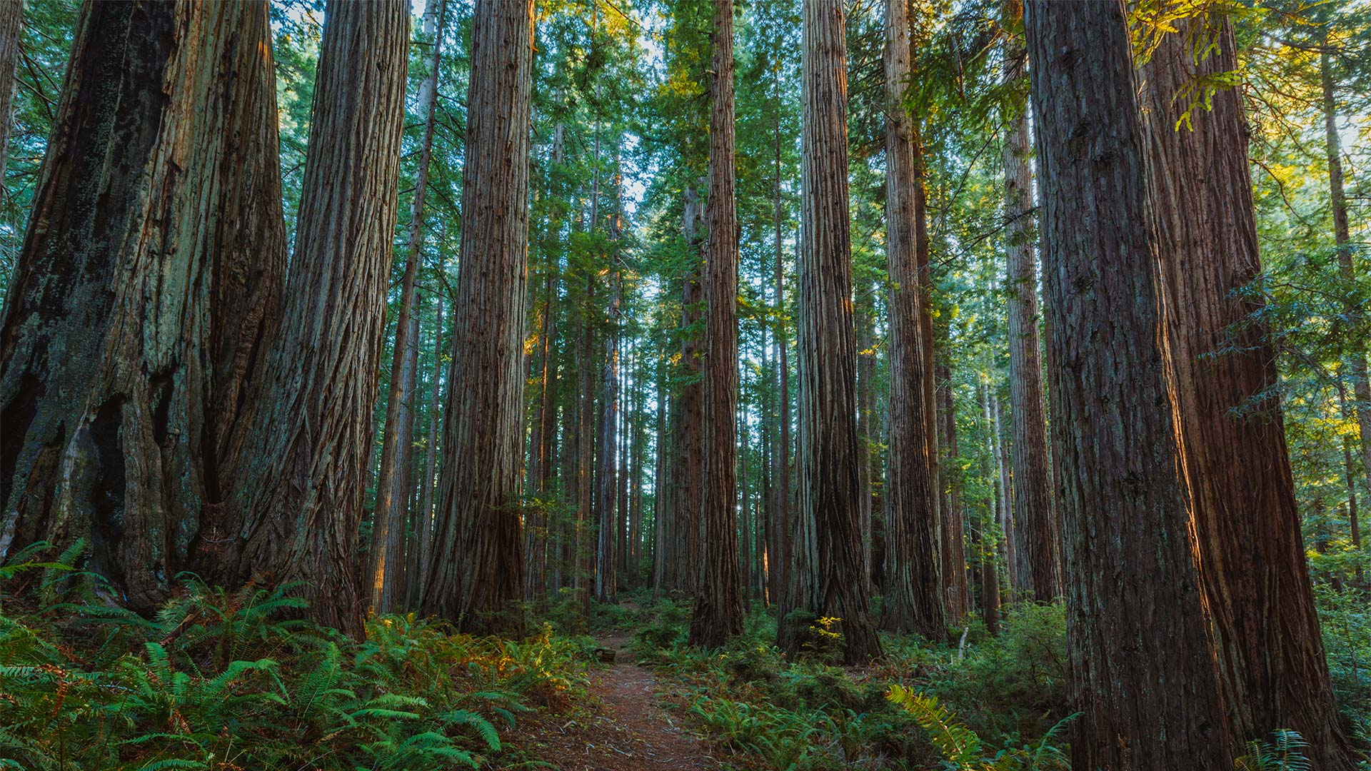 Image result for redwoods