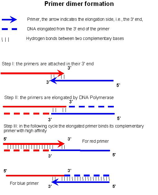 alu human dna typing through pcr Experimental loci mapped onto a human karyotpe  edvotek vntr human dna  typing using pcr #334, carolina biological using an alu.