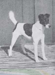 Dog Kennels York Region