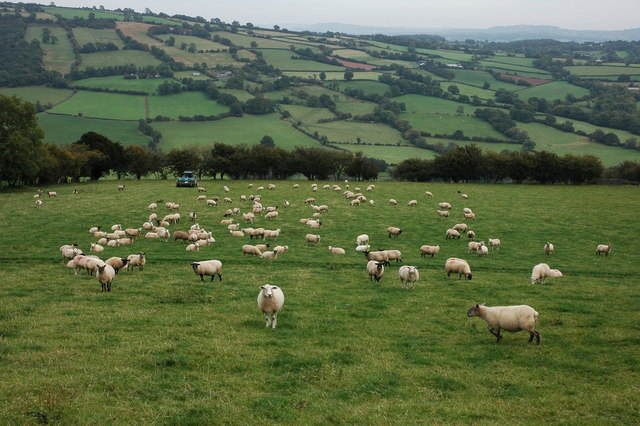 Image result for sheep in a field