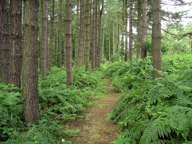 Sherwood Pines - geograph.org.uk - 511598