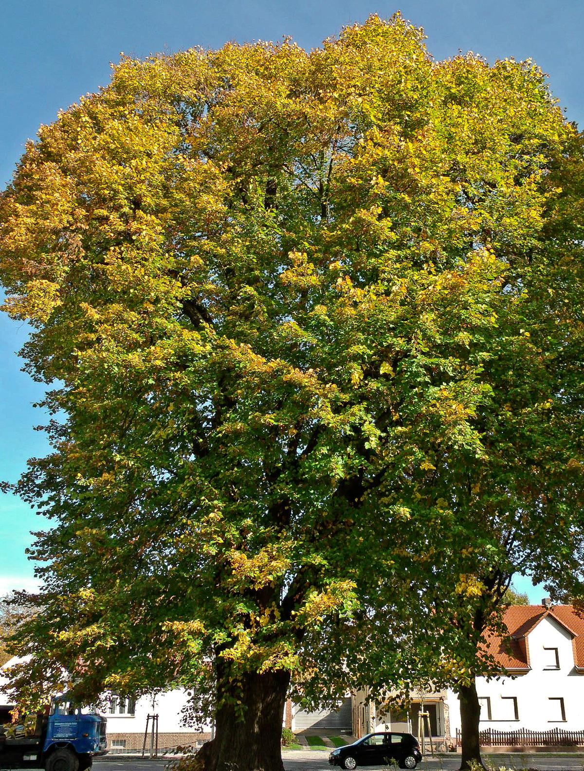 Herbst Wiki