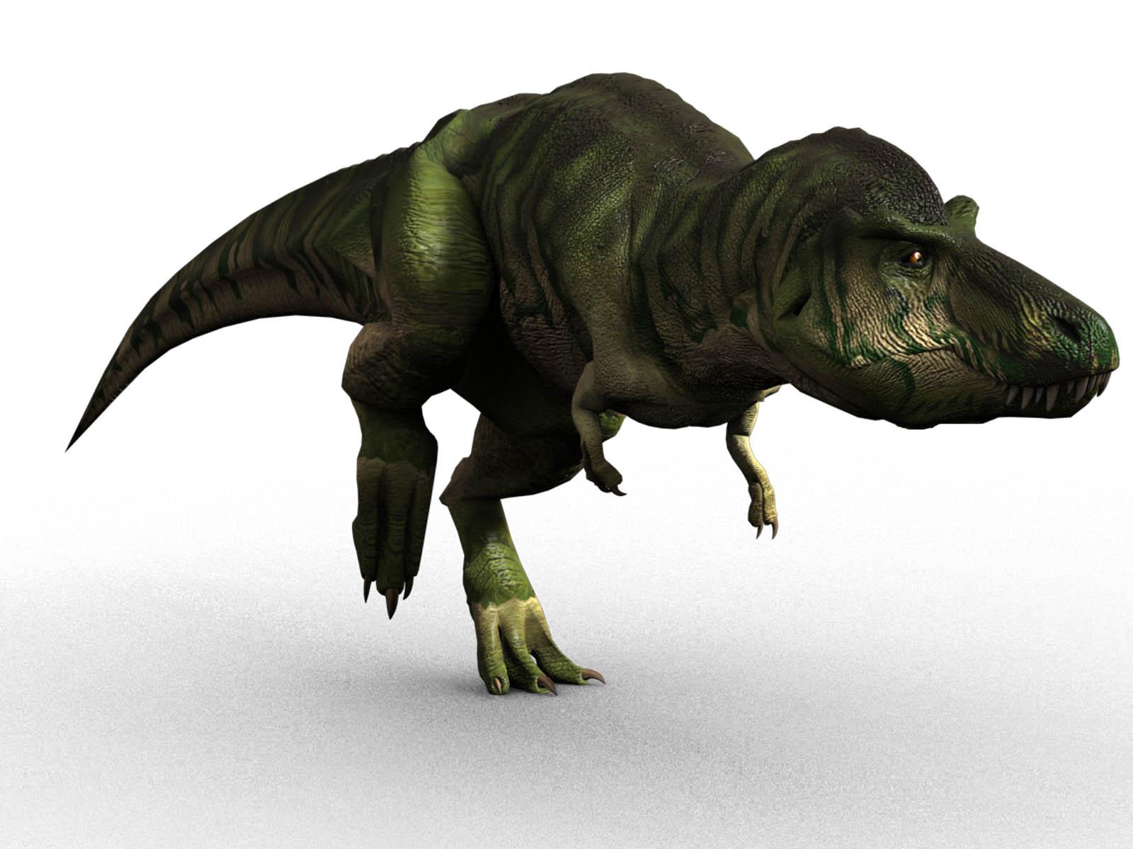 Carcharodontosaurus vs tyrannosaurus dinosaur home for Tyranosaurus