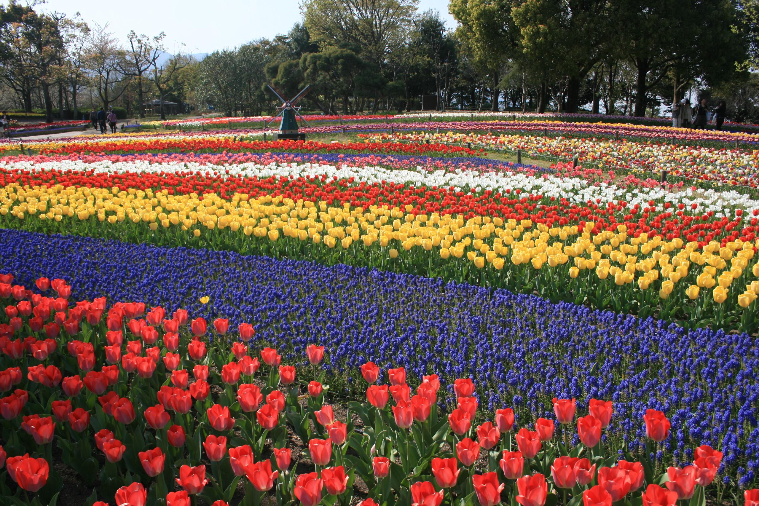Tiptoe through the tulips 35 pics photo 27 by alpsdake geenschuldenfo Gallery