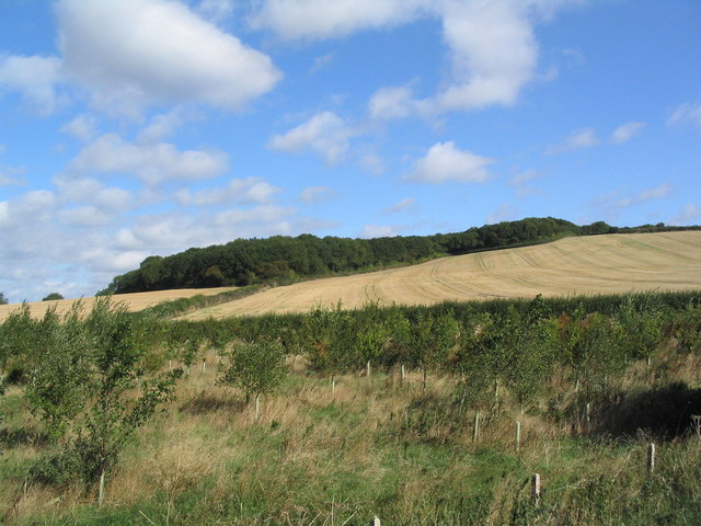 View to corner of Stoke Dry Wood - geograph.org.uk - 232425