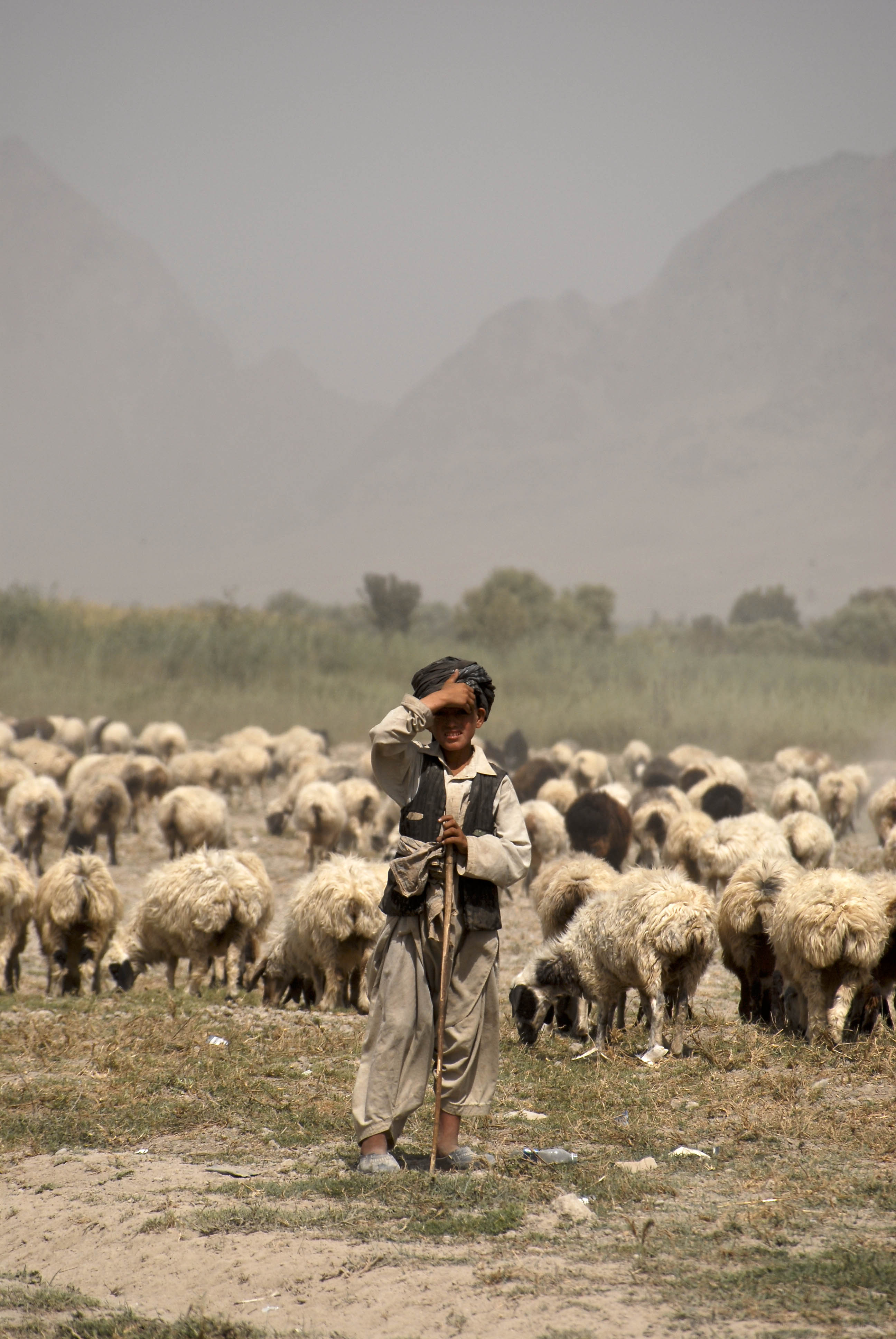 Afghan Shepherd: File:Young Afghan Shepherd In Kandahar Province.jpg