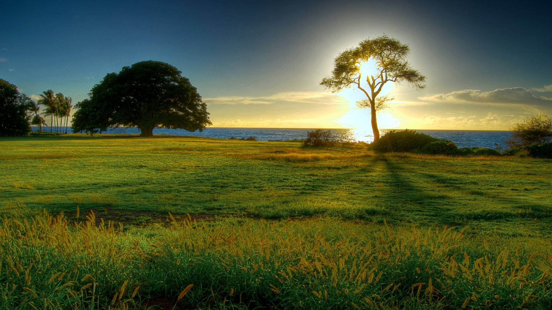 File24701 Nature Natural Beauty