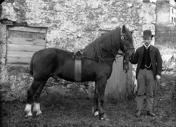 A horse (Owen)