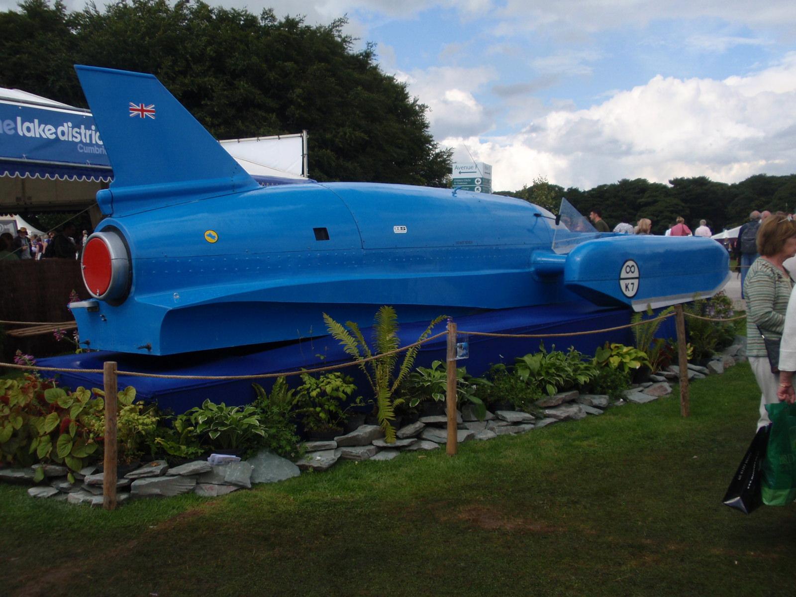 Bluebird speed dating
