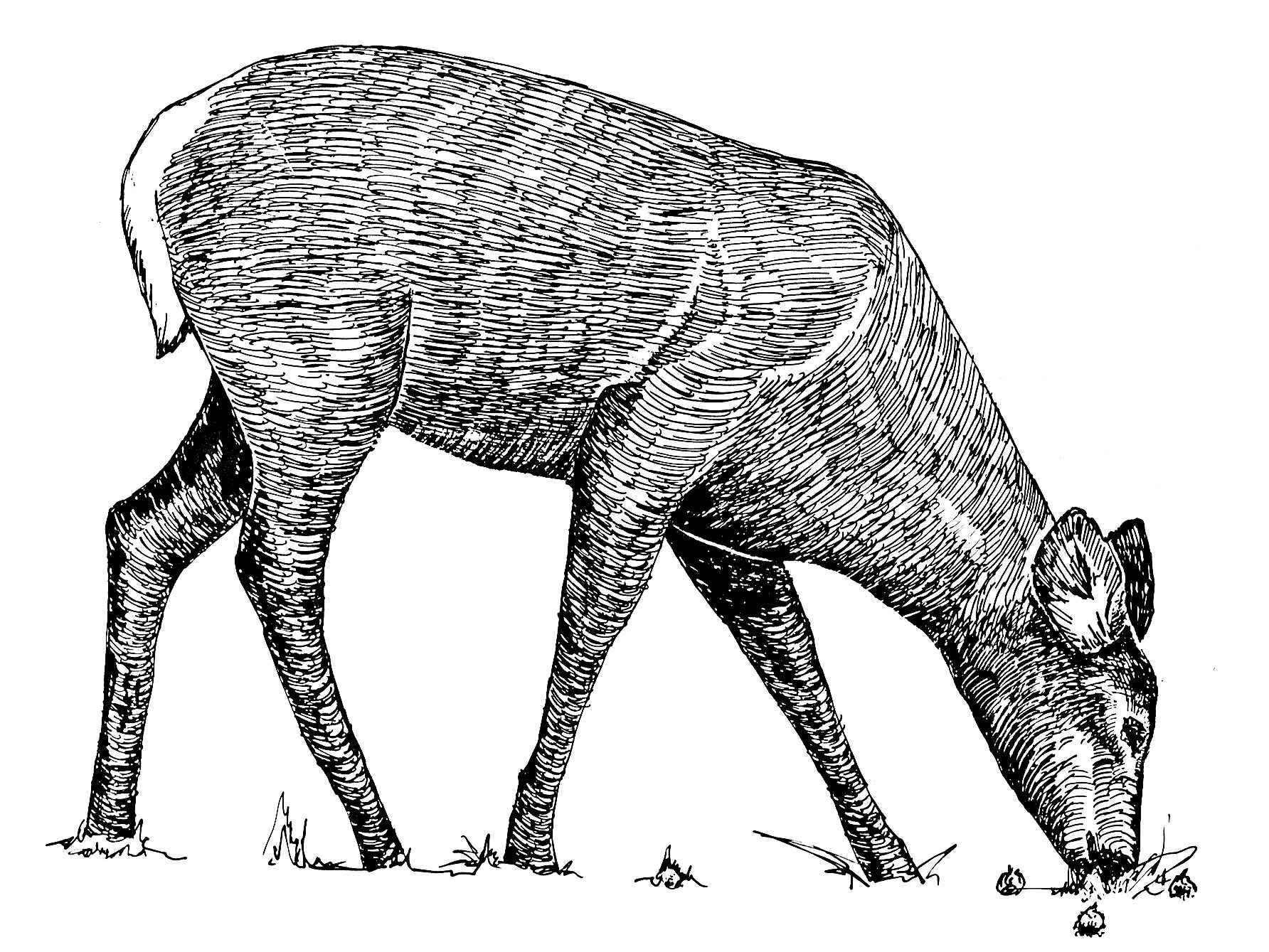 Line Drawings Of Animals Deer : File animal line art drawing g wikimedia commons