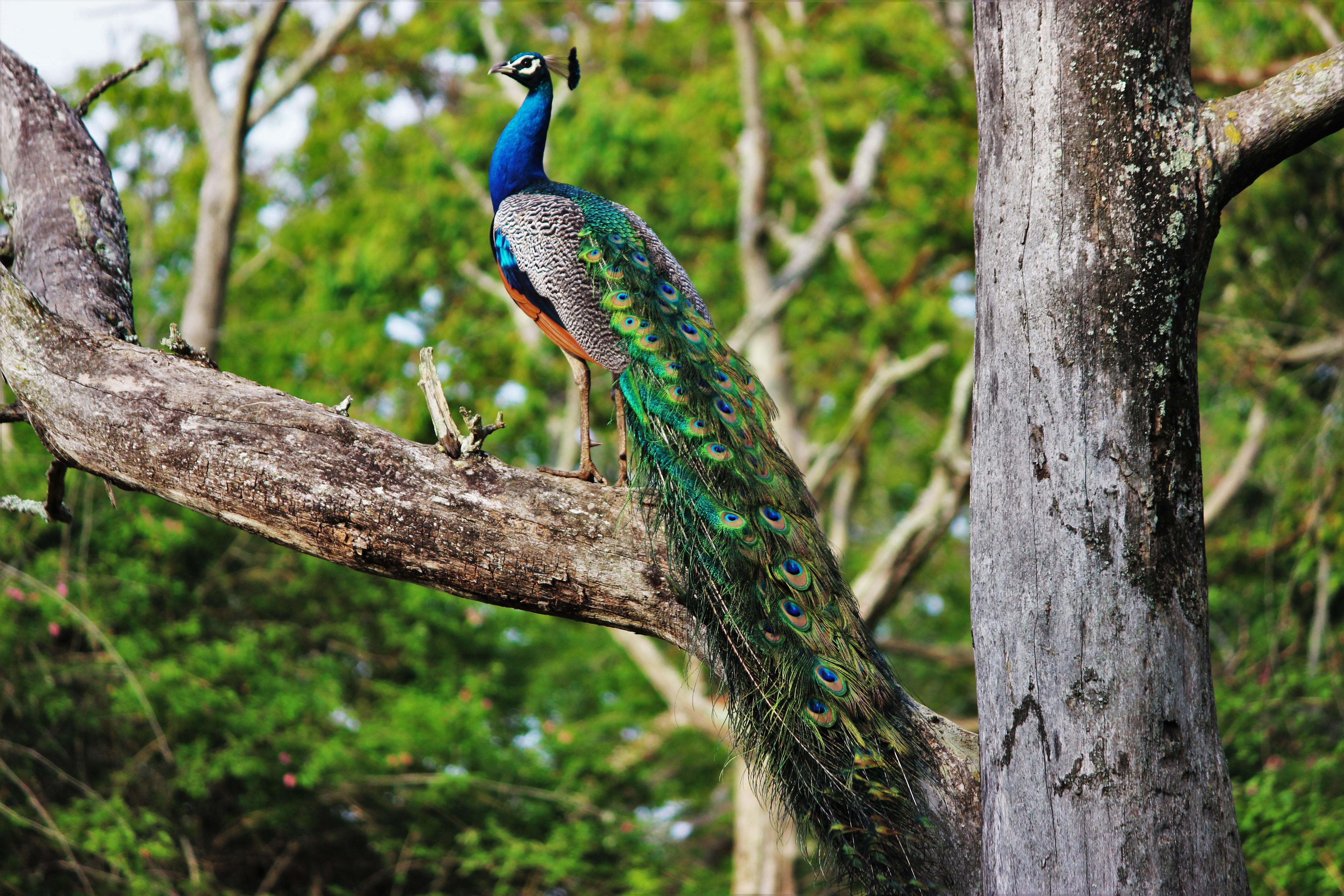 bird and tree wallpaper