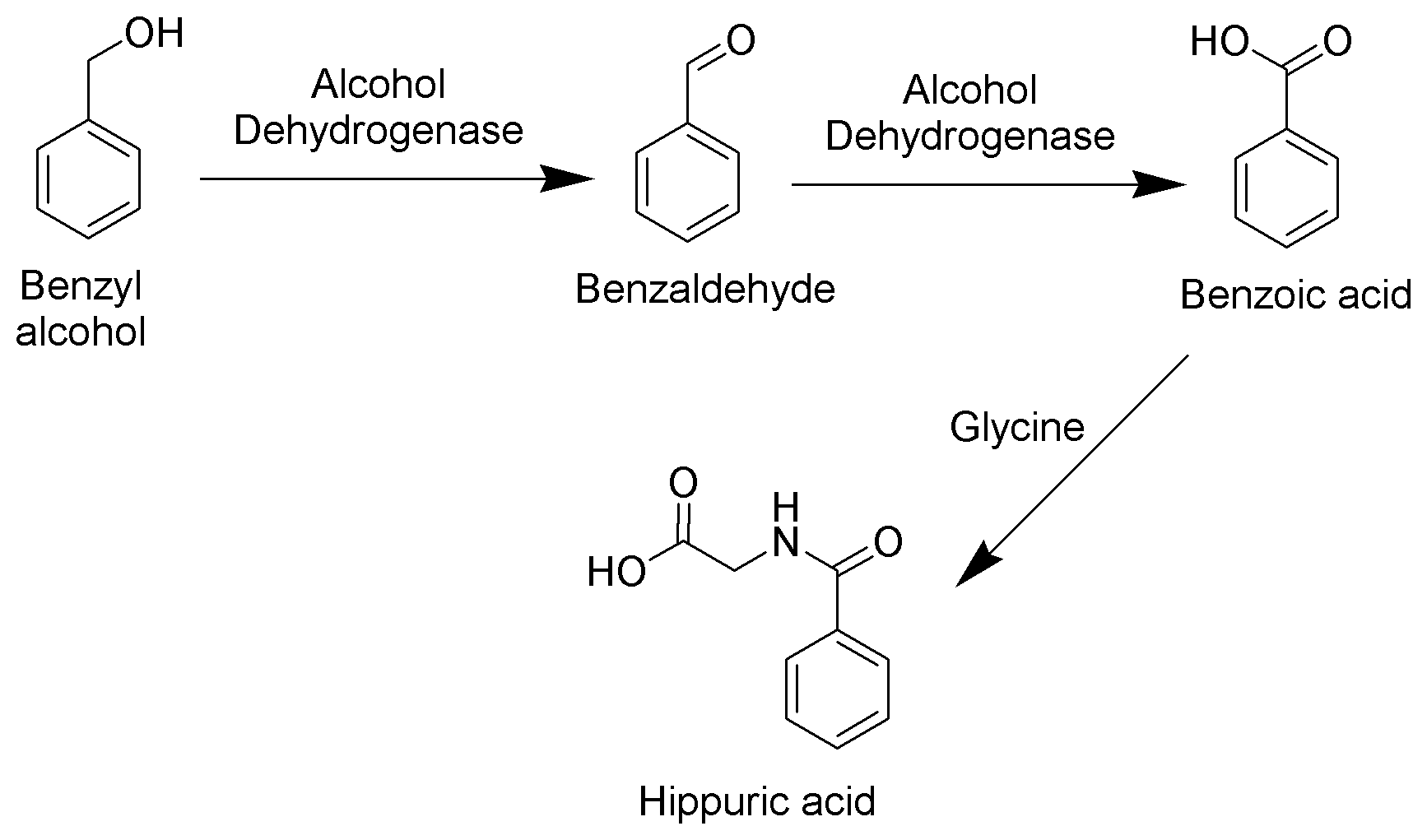 File:Benzyl Alcohol Metabolism Scheme.png