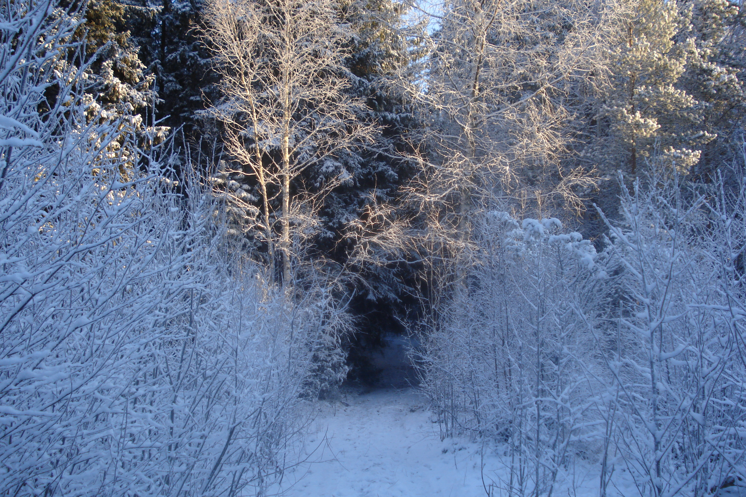 File:Boreal forest in ...