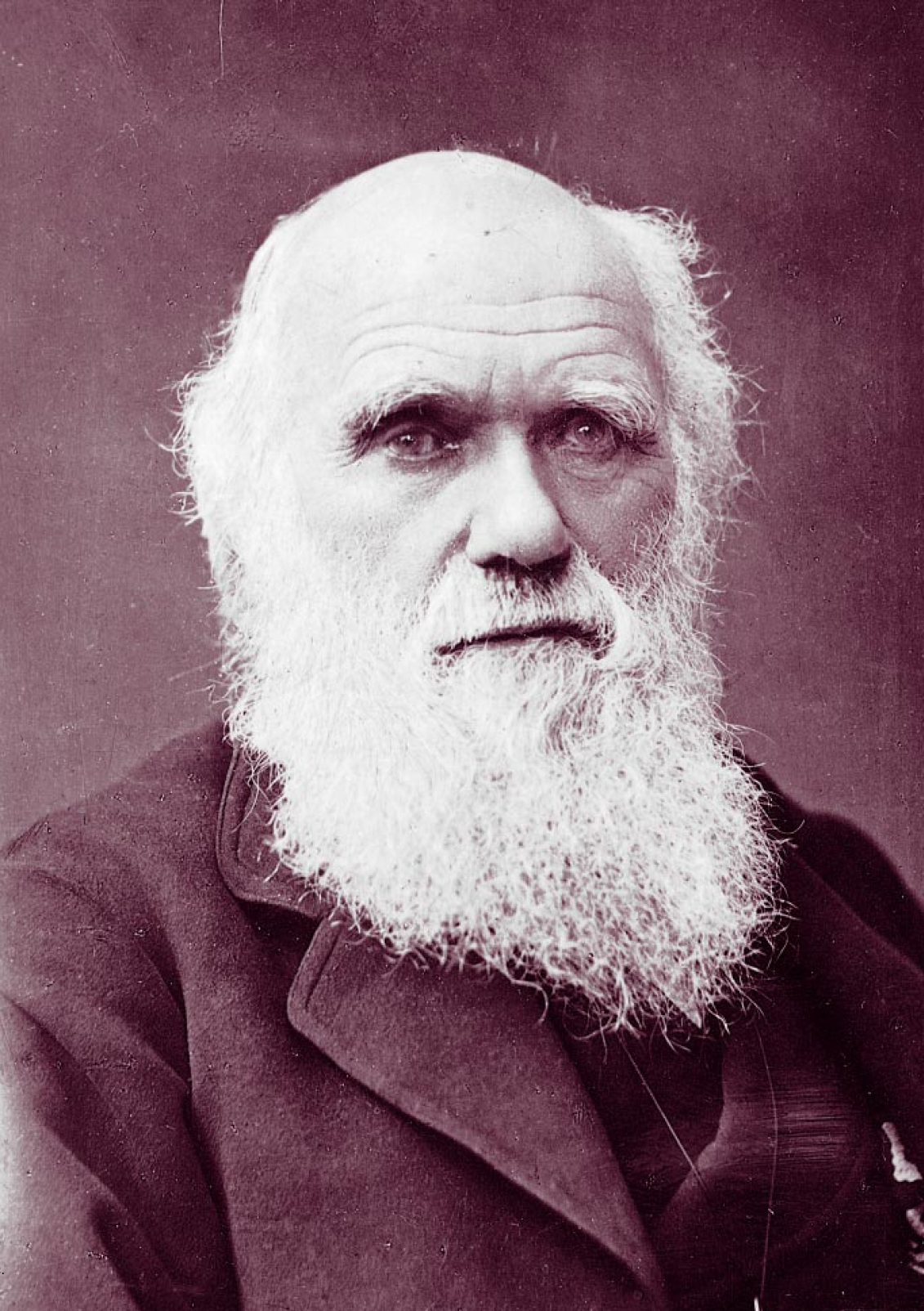 a summary of the life and works of charles robert darwin A short summary of 's charles darwin  he was born to robert and susannah darwin robert was a  the illness that had plagued darwin throughout his life.