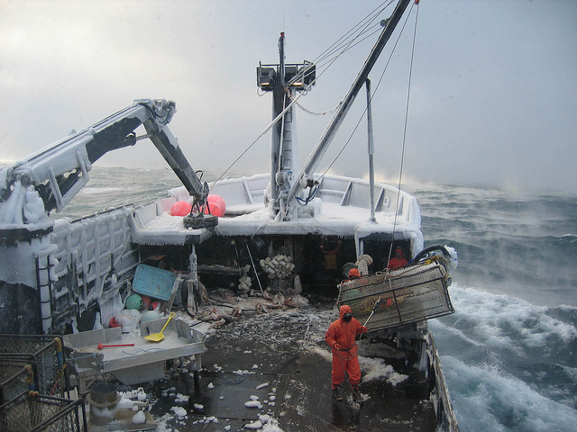 Commercial fishing in alaska wikipedia for Commercial fishing jobs