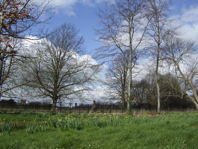 Early spring , Stanton Fitzwarren - geograph.org.uk - 357300