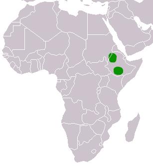 الموسوعة الكاملة للكلبيات Ethiopian_Wolf-area