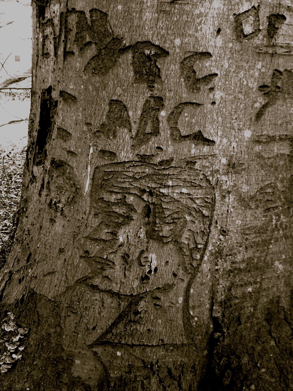Face on tree.jpg