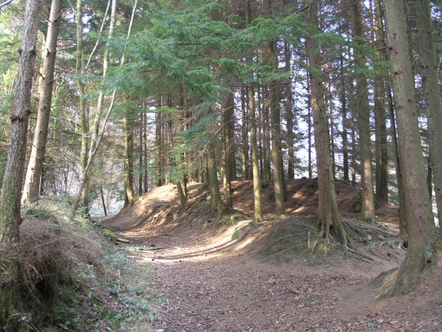 Forest Footpath - geograph.org.uk - 376977