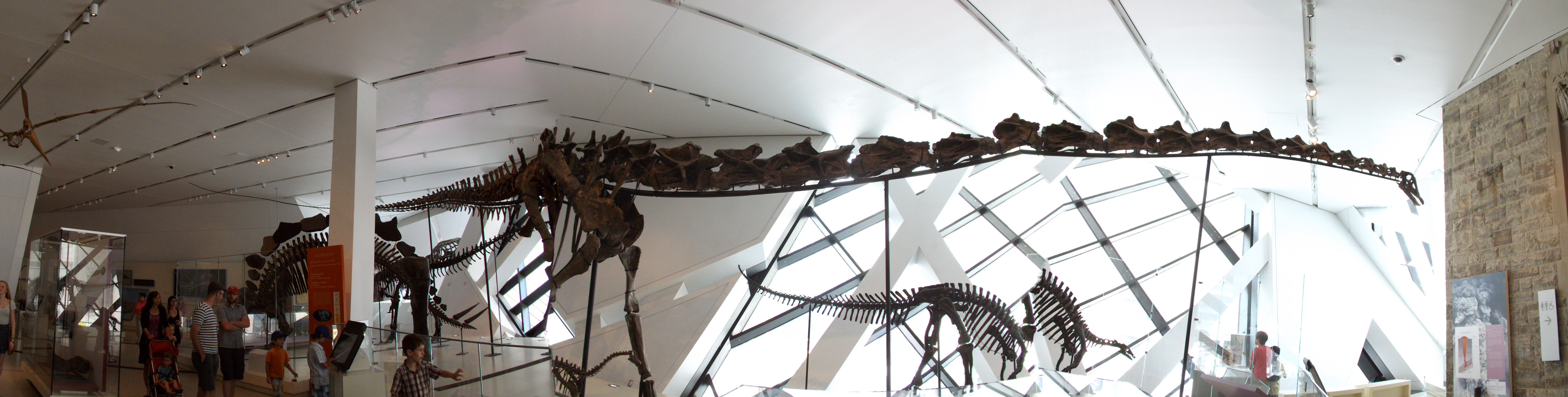 Gordo the Barosaurus, Royal Ontario Museum