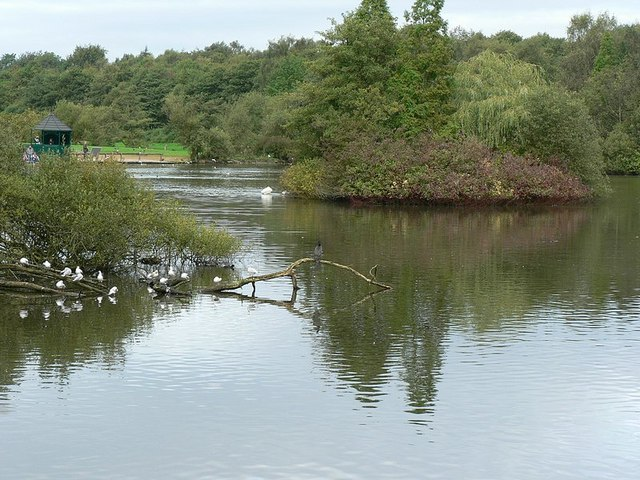 Golden Acre Park Lake, with cormorant - geograph.org.uk - 259544