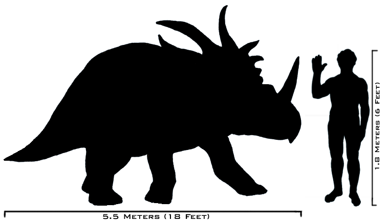 Description human styracosaurus size comparison