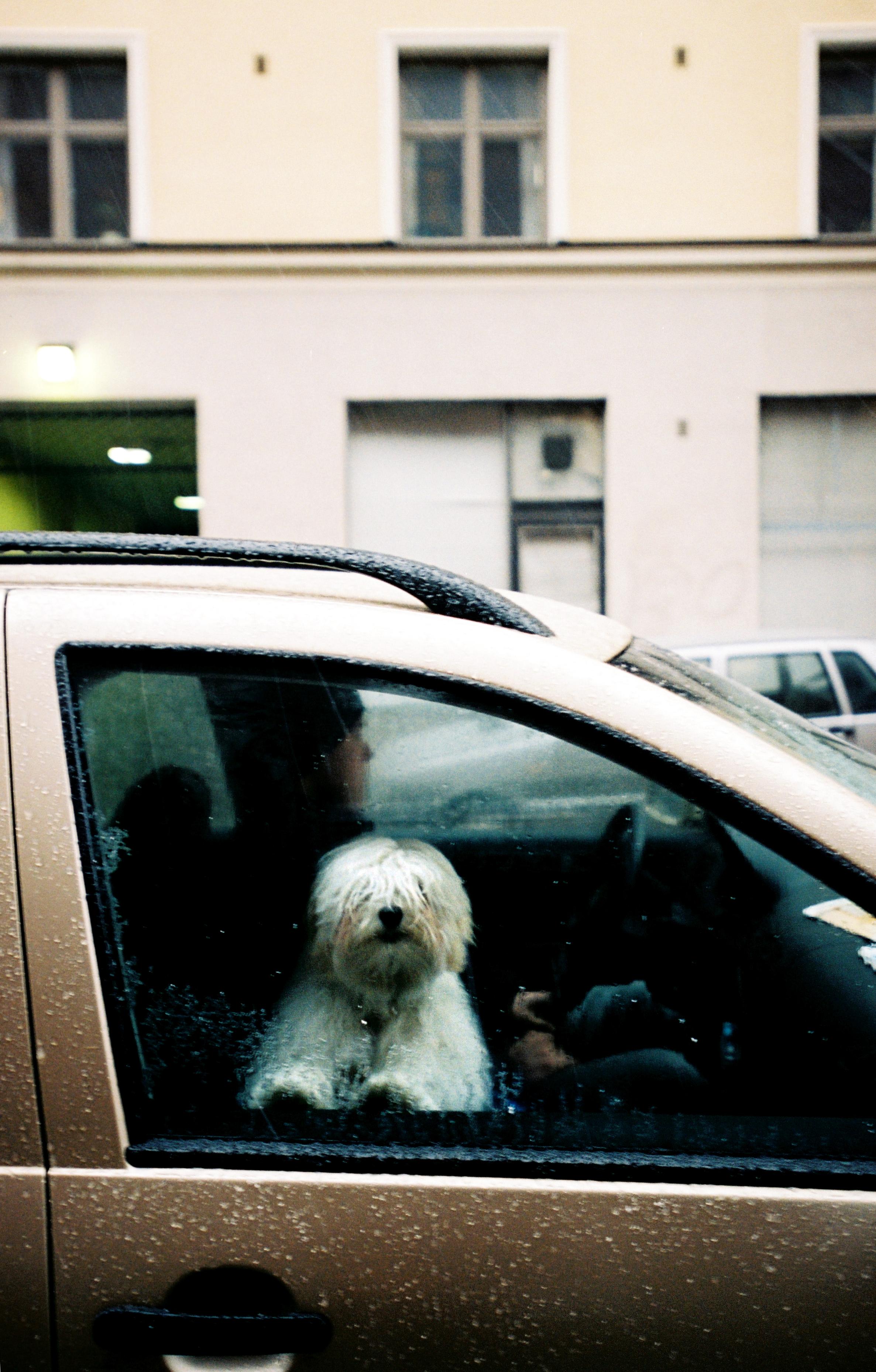 hund i bil polisen