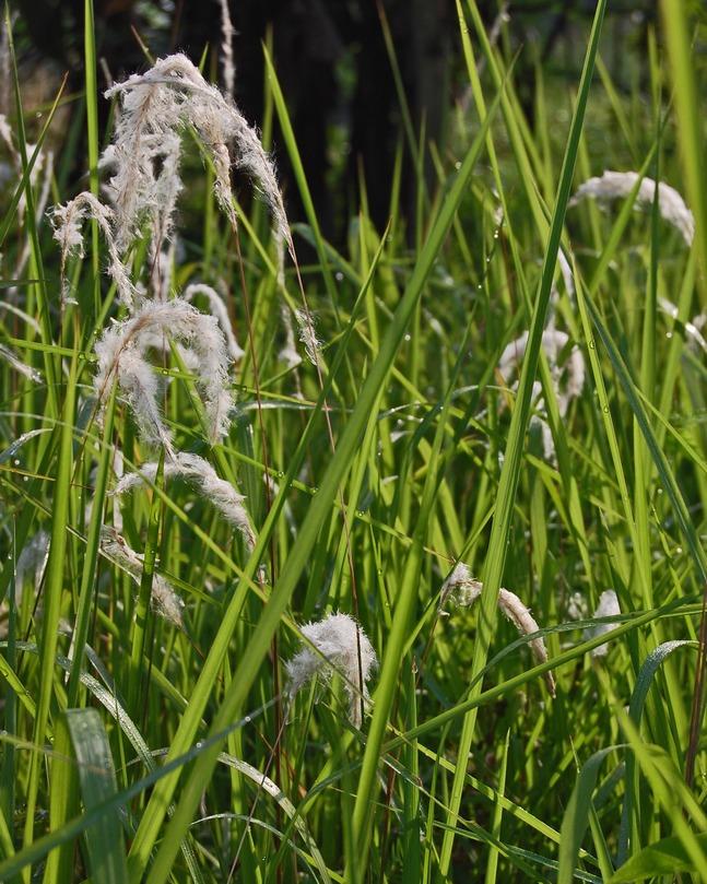 Das Gras des Todes