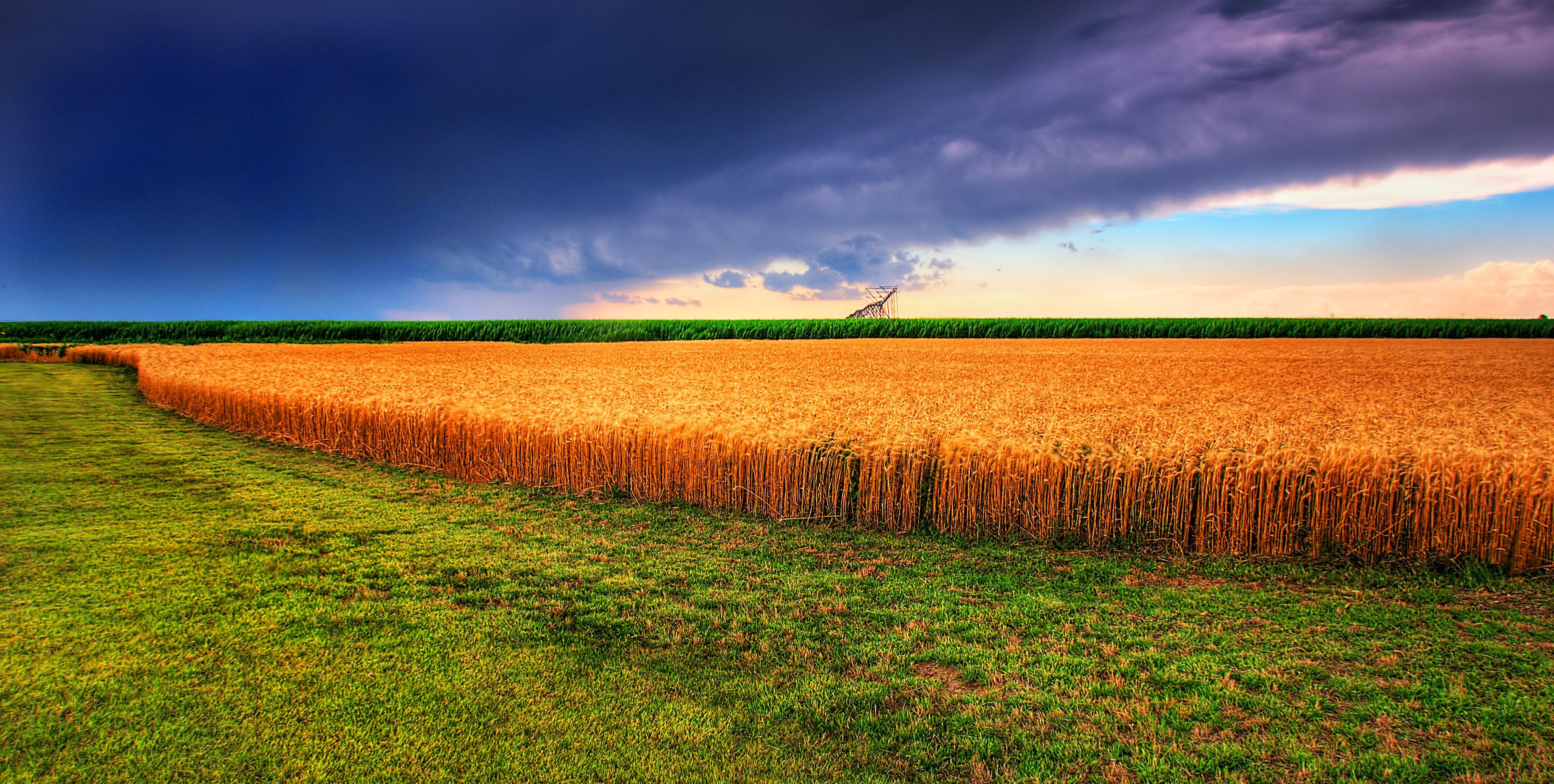 wheat field under dark blue storm clouds