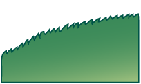 Bord des feuilles, serrulé (Finement denté en scie)