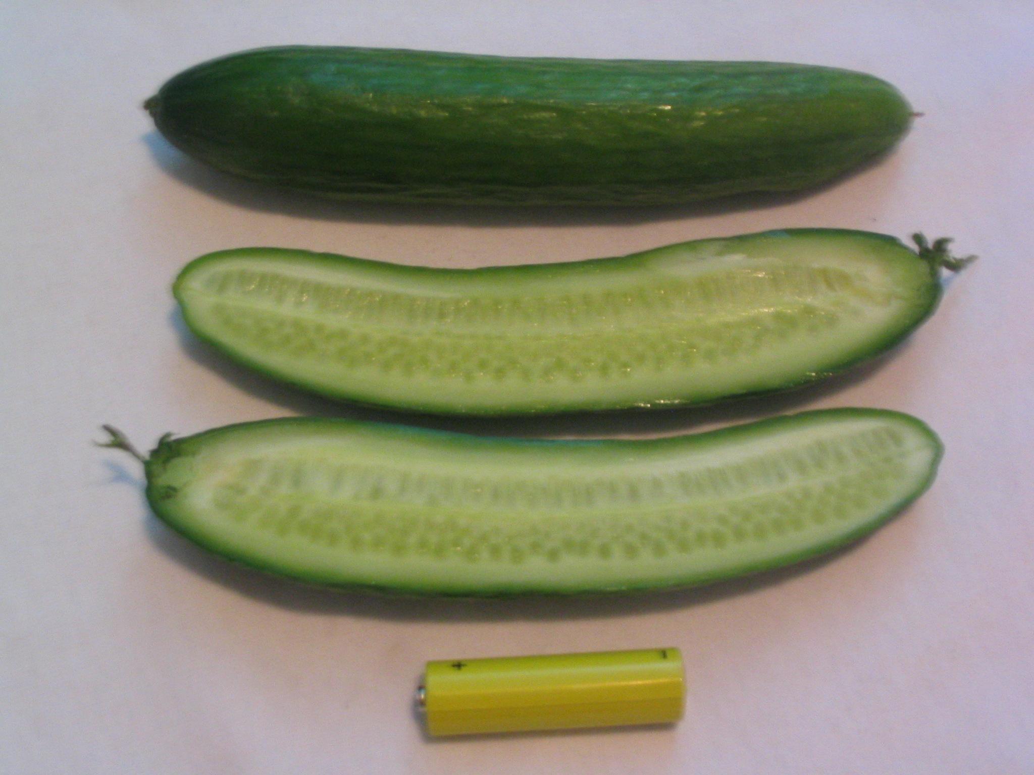 File:Mediterranean cucumber.JPG - Wikimedia Commons
