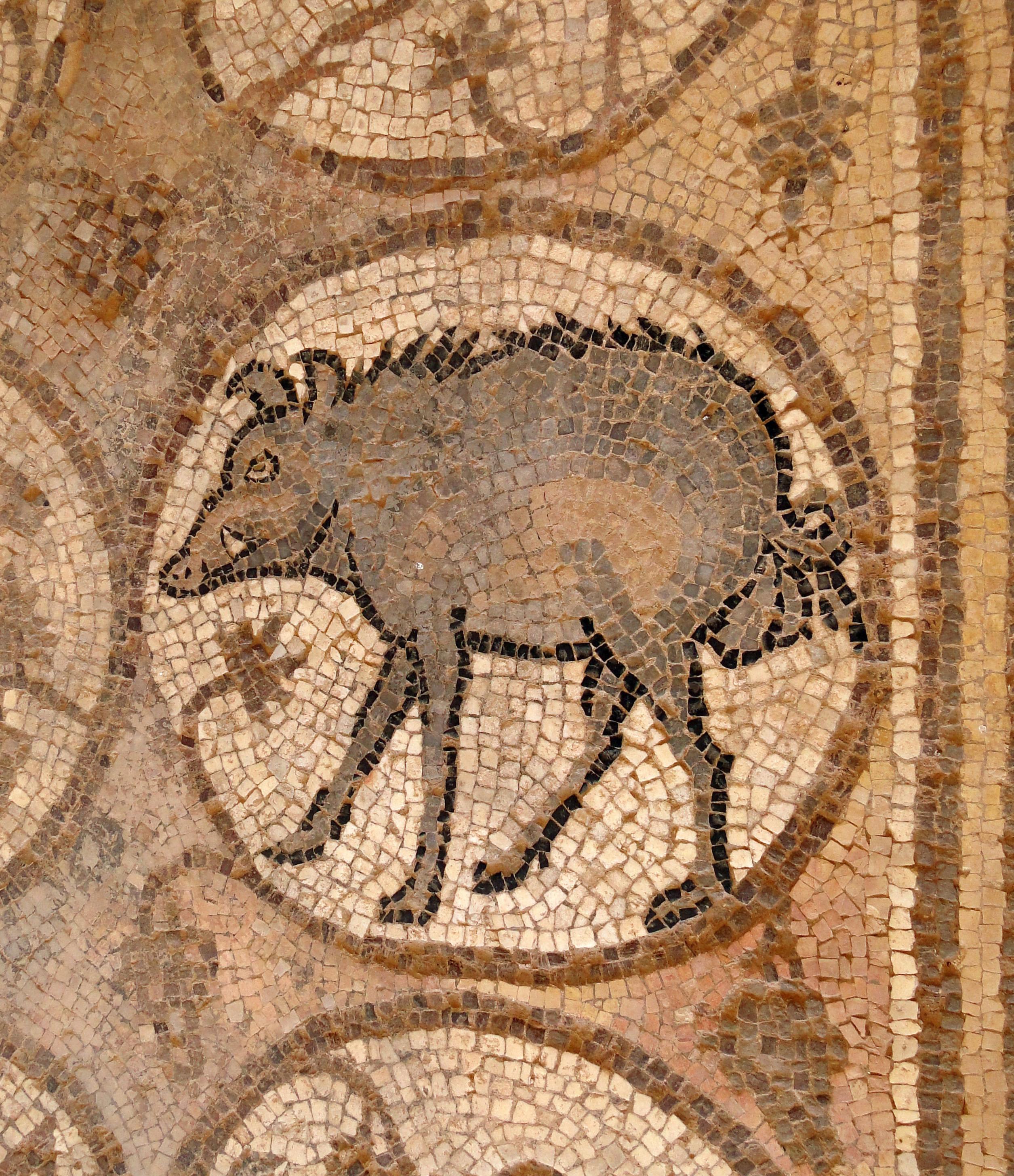File Mosaic Of A Wild Boar Petra Church Jpg Wikimedia
